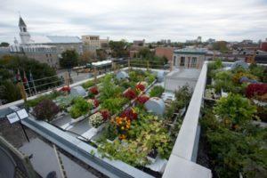 Aménagement extérieur : des potagers sur vos toits !