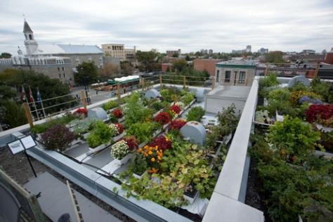 design extérieur : construire un potager sur le toit de sa maison