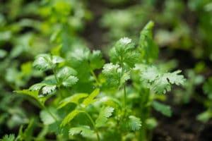 trecobois-planter-potager