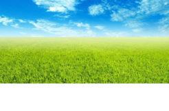 Terrain à Clavette 17220 300m2 58000 €