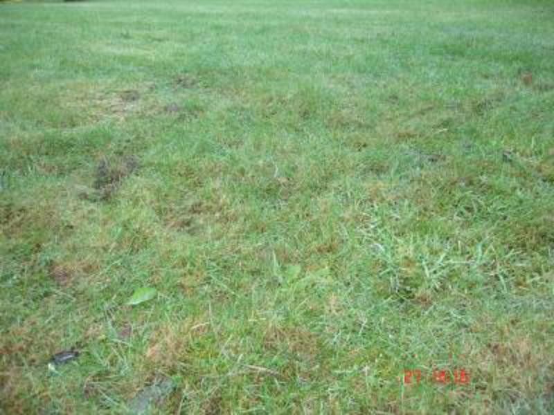 Terrain à Aigrefeuille d'Aunis 17290 300m2 47500 € - MAB-18-02-14-4
