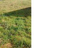 Terrain à Plélo 22170 450m2 27000 € - JBES-19-10-09-6