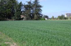 Terrain à Vildé Guingalan 22980 410m2 34000 € - PJ-19-01-18-33