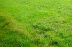 Terrain à Launaguet 31140 600m2 150000 € - JCHA-19-02-14-6