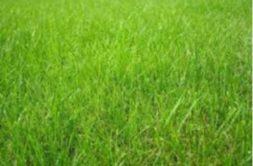 Terrain à Guichen 35580 1700m2 122000 € - PDUV-19-06-12-14