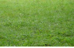 Terrain à Hennebont 56700 536m2 88440 € - NJO-19-06-17-4