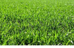 Terrain à Landaul 56690 440m2 49500 € - KMAU-19-06-26-1