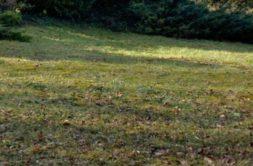 Terrain à Tresses 33370 840m2 176400 € - YFAU-20-02-04-15