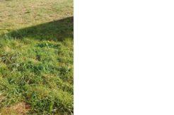Terrain à Plerneuf 22170 450m2 40500 € - JBES-19-07-22-2