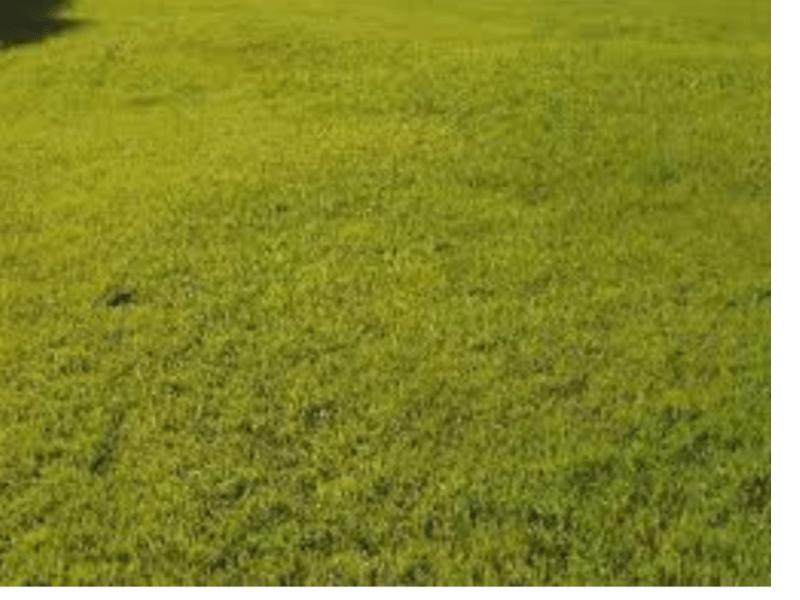 Terrain à Muzillac 56190 600m2 180000 € - YM-19-12-03-1