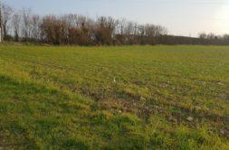 Terrain à Rochefort 17300 338m2 59800 € - ECHA-20-02-15-1
