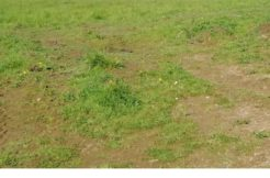 Terrain à Plouagat 22170 893m2 39000 € - AGEL-20-01-14-14