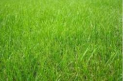 Terrain à Vieillevigne 44116 660m2 81000 € - CPIC-20-01-20-1