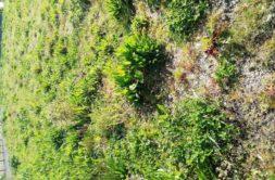 Terrain à Pléneuf Val André 22370 1936m2 176400 € - ASCO-20-03-10-13