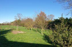 Terrain à Tonnay Charente 17430 403m2 42300 € - ECHA-20-02-15-2