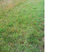 Terrain à Lantic 22410 670m2 53600 € - JBES-20-11-10-74