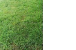 Terrain à Plerneuf 22170 395m2 35550 € - JBES-20-09-22-8