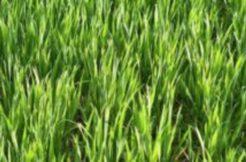 Terrain à Montbert 44140 735m2 95745 € - CLER-20-11-23-11