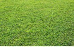 Terrain à Plonéour-Lanvern 29720 495m2 44000 € - DPAS-21-03-15-23