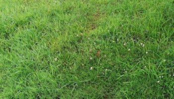Terrain à Hillion 22120 354m2 31860 € - JBES-21-10-18-4