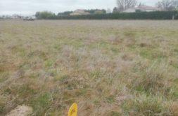 Terrain à Daux 31700 450m2 125000 € - CROP-20-10-07-76