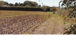Terrain à Trégarantec 29260 821m2 42200 € - YBIA-19-10-16-2